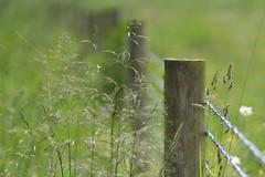 HFF - Explored (jillyspoon) Tags: ff hff happyfencefriday fencefriday fence sony sonya7iii sonyalpha