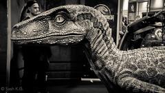 MCM-3.0-37 (| SKG Photography |) Tags: toys starwars geek dinosaur cosplay games masks celebrities comiccon madmax velociraptor mortalkombat judgedredd gotg tomellis kevinconroy londonexcel johndimaggio guardiansofthegalaxy feliciaday mcmlondoncomiccon greatbritain london unitedkingdom