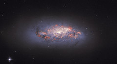 In Bloom (europeanspaceagency) Tags: ngc972 esa europeanspaceagency space universe cosmos spacescience science spacetechnology tech technology hst hubblespacetelescope galaxy supernova nasa