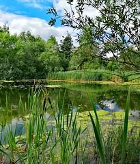 Photo of Beside the hidden lake