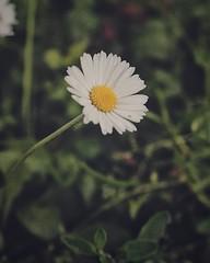 A nice flower near my house. . #flower #flowers #flowers🌸 #flowery #flower_daily #flowerpic #flowers_super_pics #flowerpower🌸 #flower_igers #flowerdaily #flowerstagram #flowerporn #flowerphotography #floweroftheday #nature #b (The Coded Photographers) Tags: ifttt instagram a nice flower near house flowers flowers🌸 flowery flowerdaily flowerpic flowerssuperpics flowerpower🌸 flowerigers flowerstagram flowerporn flowerphotography floweroftheday nature botanical summer spring flowersofinstagram photography naturephotography bloom blooms florals blossom