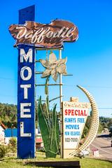 Daffodil Motel (Thomas Hawk) Tags: america daffodilmotel milton tacoma usa unitedstates unitedstatesofamerica washington washingtonstate motel neon fav10 fav25 fav50