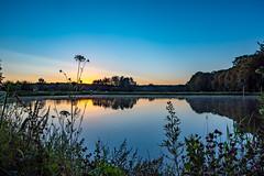 Sonnaufgang am Karpfenweiher in Dechsendorf 0573 (Peter Goll thx for +13.000.000 views) Tags: erlangen z6 nikon lake dechsendorf nature weiher spiegelung sonnenaufgang reflection nikonz6 2019 natur sunrise bayern deutschland karpfenweiher gräser grass
