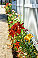 Fence and Flowers (WilliamND4) Tags: fencefriday hff nikon d810 flowers