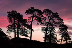 Glorious Sunrise (ShinyPhotoScotland) Tags: affection amazement art atmospheric awe backlit beautiful brightglowingcolour caledonianforest caledonianforestreserve calm colour contentment contrasts darktable digikam drama dramatic dreamy elegance emotion exuberance flora fuji fujixh1 glenaffric goldenhour harmony hdr highlands idyll imposing innocence intimatelandscape landscape light lightanddark memories morninglight nature numinous optimism peace pine pinussylvestris places pure raw rawconversion rawtherapee repetition rock saturated scotland shapely simple simplecomplex sky skyearth space spacefilling striking sumptuous sunlight sunny sunrise toned tranquil trees uplifting vibrant wilderness zen