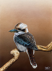 Crested kingfisher (Japanese Flower and Bird Art) Tags: bird crested kingfisher megaceryle lugubris alcedinidae ikuo togawa modern painting japan japanese art readercollection