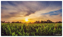 Summer Sunset (Stathis Iordanidis) Tags: sunset sundown sun sunlight farm farmland corbs agriculture nature amazing landscape geldern nrw germany travel countryside