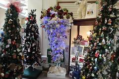Upside down Christmas tree at Charleston Christmas Collectibles (MJRGoblin) Tags: unitedstates southcarolina charleston 2019 charlestoncounty