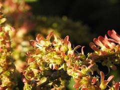 Pajeú (Alexandre Marino) Tags: pajeú pauformiga flores flowers trees