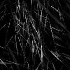 Forest Grass 028 (noahbw) Tags: az arizona d5000 dof grandcanyon grandcanyonnationalpark nikon abstract blackwhite blackandwhite blur bw dark darkness depthoffield desert grass light lines lowlight monochrome natural noahbw quiet shadow spring square still stillness explored