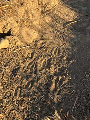 IMG_1065.jpg (cjcam) Tags: socal calabasas landscape iphone7 nature agoura california scenery santamonicamountains hiking trail talooptrail malibucreekstatepark libertycanyon getoutandexplore getoutandhike agourahills unitedstates