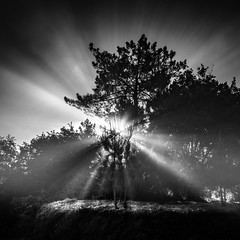 O Foxo (Noel Feans) Tags: sony a7iii 24 gm 14 sunray fog mist neboa galiza galicia estrada