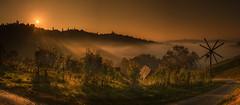 Sunshine for the wine (Peter Heitzinger) Tags: vino wein austria landscap grappe styria reben steiermark kitzeck