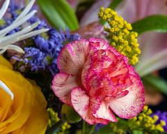 Flowers (AChucksEyeView) Tags: flower water drops color bloom petal