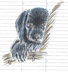 Kiwi (Filius2) Tags: dog dogs puppy drawing coloredpencil