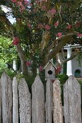 HFF The 'Before' Fence (Omunene) Tags: fence fencefriday weathered needspaint bayoustjohn neworleans