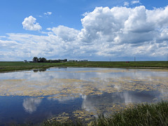 Storm clouds moving in (annkelliott) Tags: alberta canada franklakearea seofcalgary scenery sky clouds stormclouds grass field farm wetland water reflections outdoor summer 3july2019 nikon p900 nikonp900 coolpix annkelliott anneelliott ©anneelliott2019 ©allrightsreserved