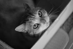 Tatami (冰冷熱帶魚) Tags: fujifilm xpro2 xf50mm digital cat tatami monochrome bw