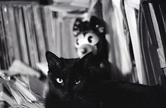 Puss & Friend (BudCat14/Ross) Tags: cats kitties bxw analogue