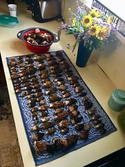 Morels (Ntvgypsylady) Tags: mushrooms fungi morels forageforfood springmushrooms wildflowers