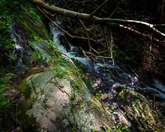 Smoky Mountain Stream (runcolt12) Tags: waterfall butterfly stream northcarolina southcarolina smokymountains tennessee smokymountainsnationalpark