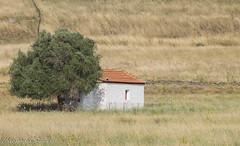 Summer at Lesvos island, Aegean Sea, Greece (Siminis) Tags: siminis haralambossiminis mytilene lesvos lesvosisland aegean aegeansea greece summer church tree