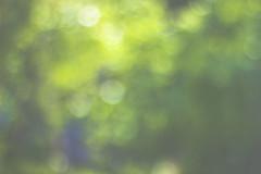 Фото бокке листва, весна, лето (Nanaccept) Tags: nanaccept боке листва зелень весна лето пятна крапинка фото обои фон картинки красивыекартинки background иллюстрация фоны photo pictures лучшиефото фотосессия фотоархив фотка фотки цвет экспозиция выдержка искусство