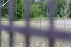 Fenced fence (Pascal Volk) Tags: berlin lichtenberg landsbergerallee berlinlichtenberg fence valla zaun fencedfriday sommer summer verano canoneosr canonef100mmf28lmacroisusm 100mm dxophotolab bokeh dof depthoffield