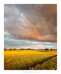 The Gold at the End of the Rainbow (Amar Sood) Tags: amarsoodphotocom amarsoodphotography landscape landscapes rainbow stormclouds golden samsunggalaxys9plus samsung phone