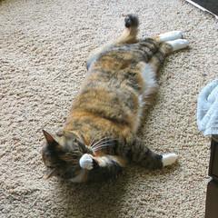 Gracie 7 May 2019 2918Ri sq (edgarandron - Busy!) Tags: gracie patchedtabby cat cats kitty kitties tabby tabbies cute feline