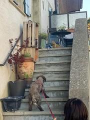 Feline-canine standoff in Lavaux (Bex.Walton) Tags: switzerland lausanne travel grandvaux lavaux vineyard village swisswine wine winery terraces unesco