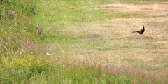 """Naturschutzgebiet """"Versmolder Bruch"""" (ernst.ruhe) Tags: reh nsgversmolderbruch nsg natur naturschutzgebiet"""