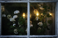 Sneaking around the house (1): Old window (bohelsted) Tags: home evening sundown rødovre em5markii varioelmarit leicadg 1260 flowers window warmcold glass lookthrough