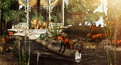 Fox Crossing (Alexa Maravilla/Spunknbrains) Tags: jian fameshedheart foxwood summerfest19 secondlife sl animals water studio skye madpea fair mesh 3dmesh digital photogrpahy virtual world blog blogger home outdoors fox woodpecker