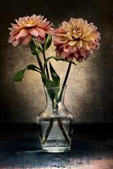 Just two flowers (marcello.machelli Immagini) Tags: dhalia dalia pink flower flor fiore naturamorta stilllife arts artistic artistico arte finearts vase vaso fiori nikon vintage