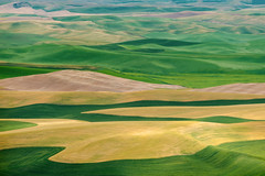 Eastern Washington Palouse (EdBob) Tags: palouse steptoe steptoebutte steptoebuttestatepark farmland farm farming fields wheat lentils food landscape view viewpoint abstract colorful yellow green outdoors beautiful hills rolling washington washingtonstate washingtonstatetourism easternwashington whitmancounty nopeople edmundlowephotography edmundlowe edlowe america usa allmyphotographsare©copyrightedandallrightsreservednoneofthesephotosmaybereproducedandorusedinanyformofpublicationprintortheinternetwithoutmywrittenpermission agriculture agricultural summer