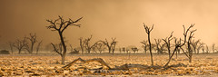 Sossusvlei storm (Jerzy Orzechowski) Tags: wind dune sand landscape sunset namibia abstract trees orange sossusvlei actually is another world