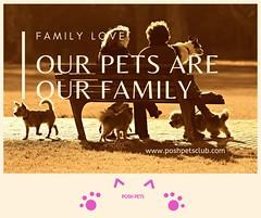 Our pets 1 (silvanagjergji) Tags: