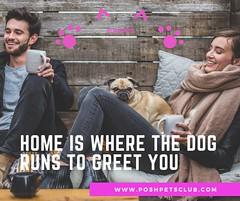 Home is 1 (silvanagjergji) Tags: