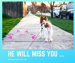 He will miss (silvanagjergji) Tags: