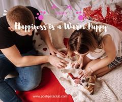 Happiness is a (silvanagjergji) Tags: