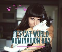 Cat world domination (silvanagjergji) Tags: