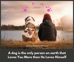 A dog is the only 1 (silvanagjergji) Tags: