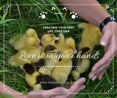 Love is in (silvanagjergji) Tags: