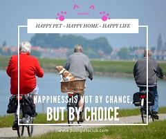 Happiness is (silvanagjergji) Tags: