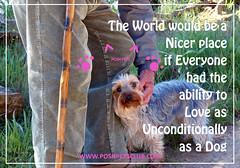 Love Unconditionally 1 (silvanagjergji) Tags:
