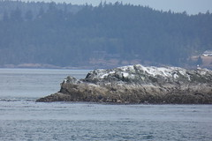 Whale Watching Tour (tlucal) Tags: whalewatching fz80 pugetsound orca killerwhale
