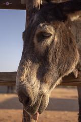 Mago de Oz_87 (Almu_Martinez_Jiménez) Tags: burritos donkey love refugio amor animal respeto bienestar