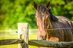 Do you mind to talk? (Yuri Dedulin) Tags: 2019 animal fun horse lordstirlingstable nature newjersey outdoors pony riding stable summer yuridedulin animalthemes cavalry colorimage daytrip farm fence grass greencolor horizontal mammal mare nopeople one pasture portrait ruralscene wood