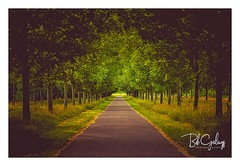 A day in July (Bob Geilings) Tags: trees mood flora road green yellow brown stilllife leaves landscape